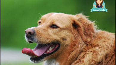Photo of تفسير حلم هجوم الكلاب