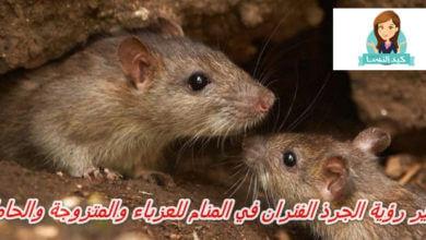 Photo of تفسير رؤية الجرذ الفئران في المنام للامام الصادق