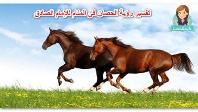 Photo of تفسير رؤية الحصان فى المنام للإمام الصادق